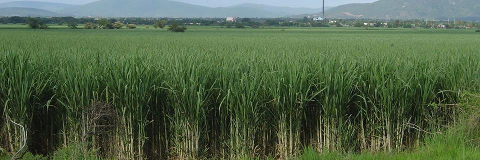 Posicionamiento de la UNC ante el conflicto azucarero con EUA